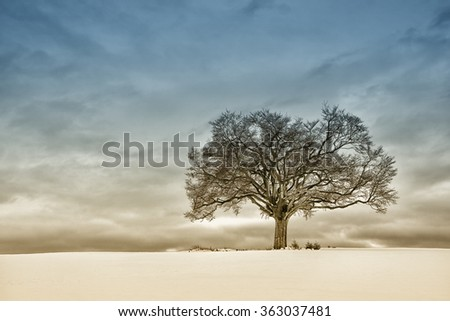 lonely tree in winter season