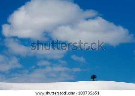 lonely tree in winter the mountains, the Carpathians, Ukraine - stock photo