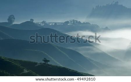 Lonely tree - Misty morning at tea plantation farm - stock photo