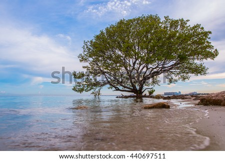 Lonely tree on a background seascape closeup. Large green leaves. Blue sky Pacific ocean and sand. Miami, Florida, USA. Daytime sunny. - stock photo