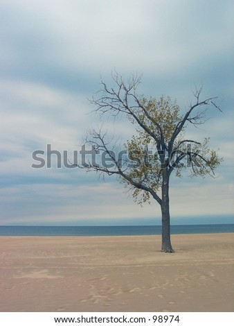 Lonely tree on a beach. - stock photo