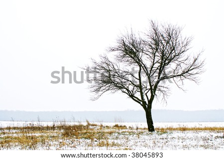 Lonely tree on a cloudy winter day - stock photo