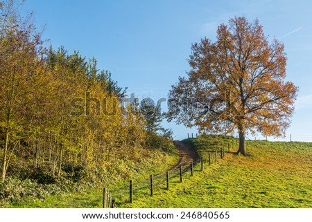 Lonely tree on a dike - stock photo