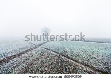 Lonely tree on a frozen field in winter morning