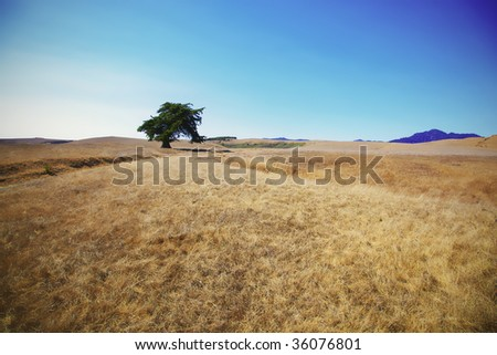 Lonely tree on a hill - stock photo