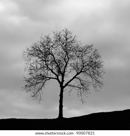 Lonely tree on a hill in back light - stock photo