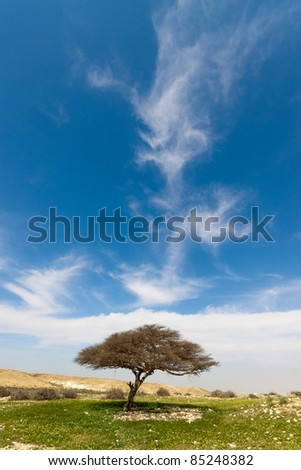 Lonely tree on a meadow of green grass under blue sky - stock photo