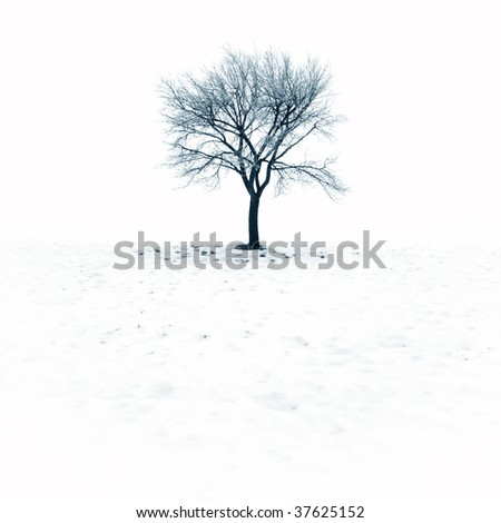 Lonely tree on a winter day