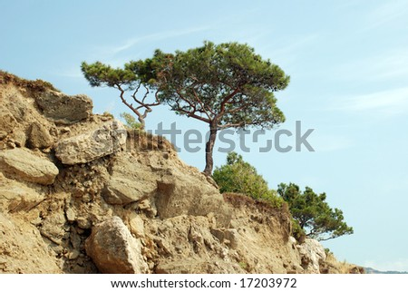 Lonely tree on cliff rocks