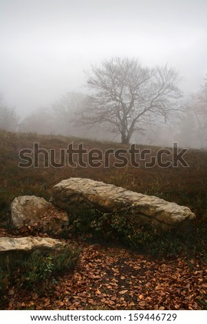 lonely tree on cold and desolate landscape - stock photo