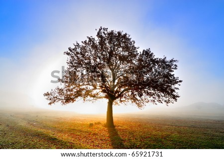 lonely tree on field at dawn - stock photo