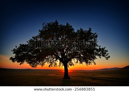 lonely tree on field at dawn, Dobrogea, Romania - stock photo