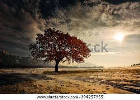 lonely tree on field in winter - stock photo