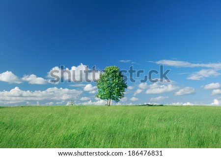 Lonely tree on green field - stock photo