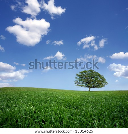 Lonely tree on green filed, the blue sky and white clouds