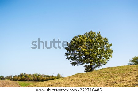 Lonely tree on hill, lone tree - stock photo