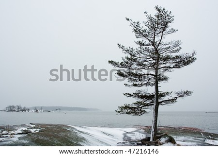 Lonely tree on icy beach - stock photo