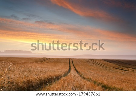 Lonely tree on north Poland fields.Pomerania district/Lonely tree - stock photo