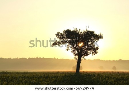 Lonely tree on the corn field illuminated by the rising sun. - stock photo