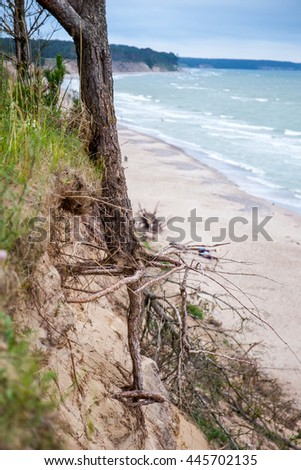 Lonely tree on the dune