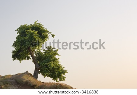 lonely tree on the edge of a cliff
