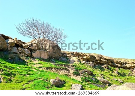 Lonely tree on the edge of a rocky slope - stock photo
