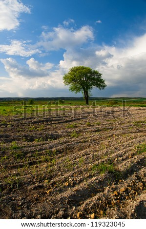 Lonely tree on the field and a blue sky - stock photo