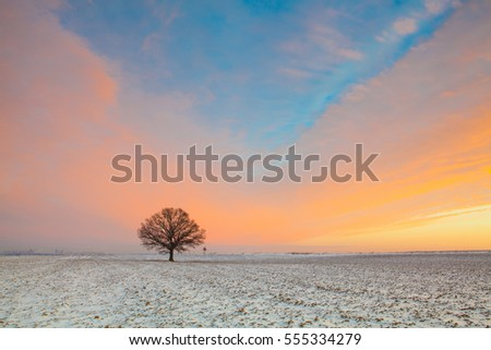 Lonely tree on the field in the frosty morning. Amazing winter landscape.