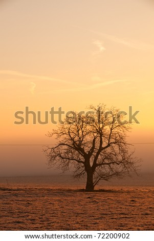 Lonely tree on the field in the mist at sunrise