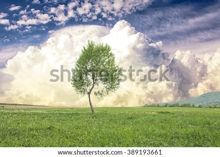 Lonely tree on the green spring meadows in the mountains over cloudy sky - stock photo