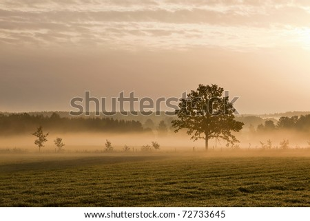 Lonely tree on the ground with morning mist - stock photo