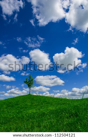 lonely tree on the hill - stock photo