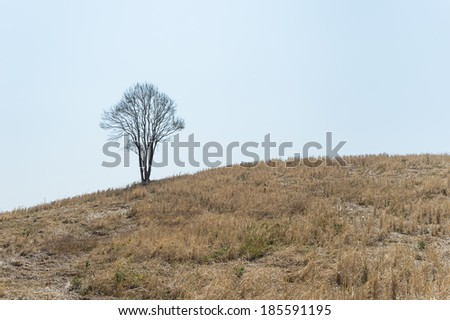 Lonely tree on the hill