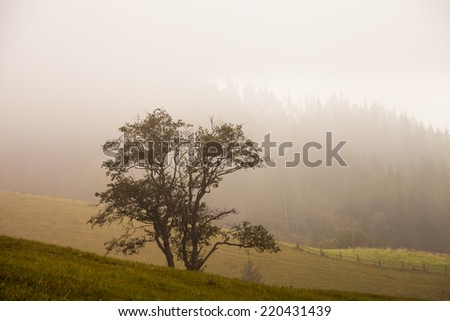 Lonely tree on the hill, above the misty valley in Ukraine