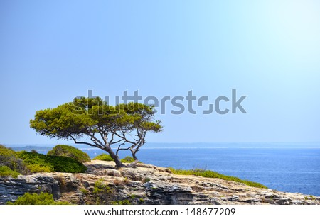 Lonely Tree on the Rock in the Sunshine in Mallorca, Spain ( Balearic Islands ) - stock photo