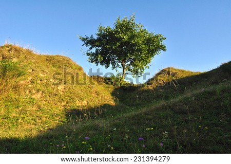 lonely tree on the slopes in the evening  - stock photo