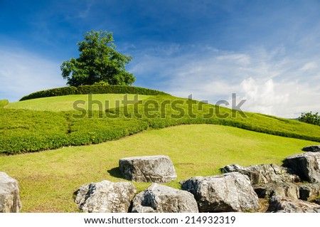 Lonely tree on the top of a hill - stock photo