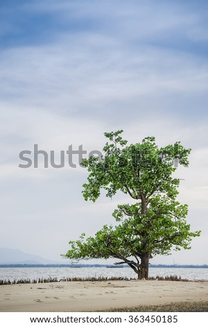 Lonely tree on the waterfront; Beautiful nature