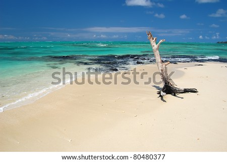 Lonely tree on wonderful beach of Ile aux Cerfs near Mauritius island