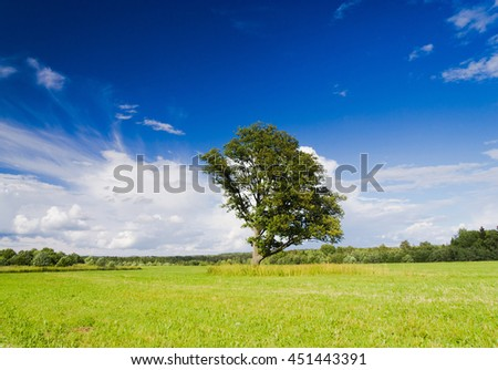 Lonely Tree Scenic View