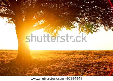 lonely tree silhouette on open field at sunset vibrant orange - stock photo