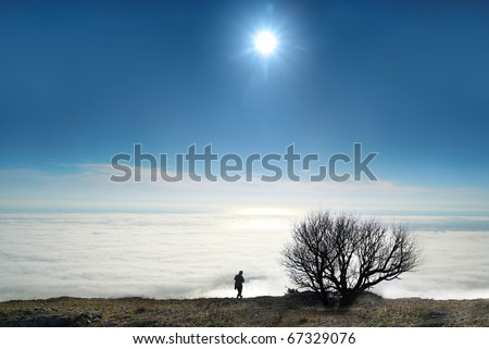 Lonely tree with clouds and blue sunny sky