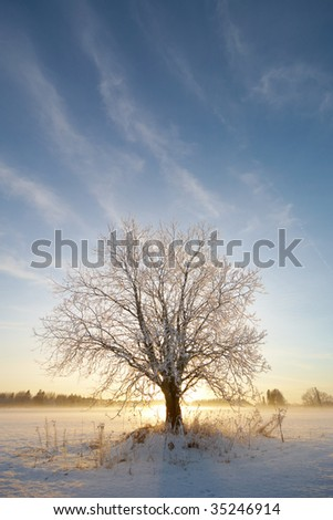 Lonely Tree with Snow and Sun