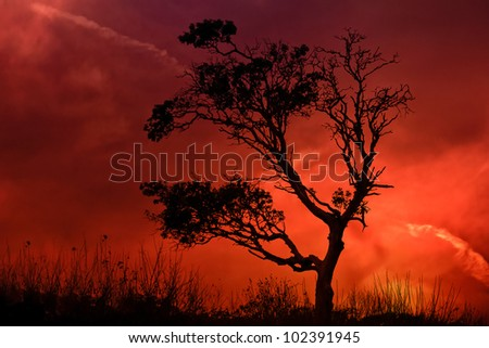 Lonely tree with sunset in background. - stock photo