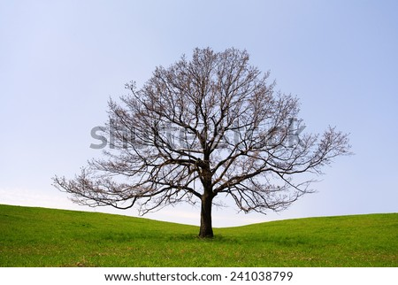 Lonely tree without leaves - stock photo