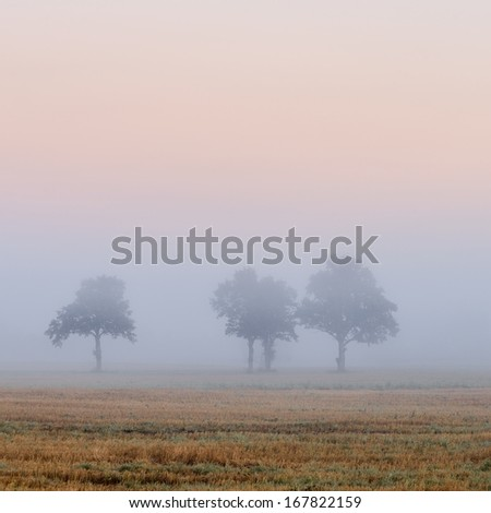 lonely trees in the field in very strong fog