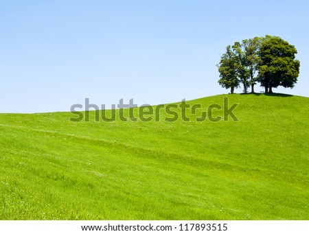 Lonely trees on the hill - stock photo