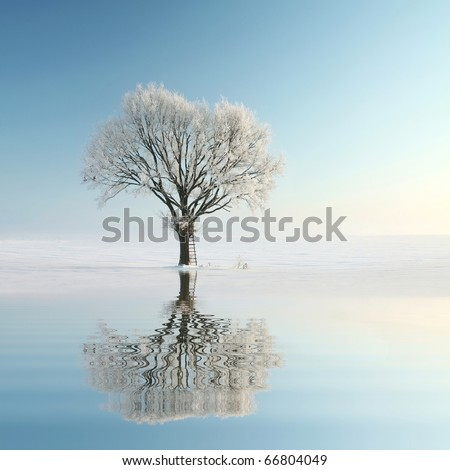 Lonely winter tree covered with frost. Photo taken using a polarizing filter. - stock photo