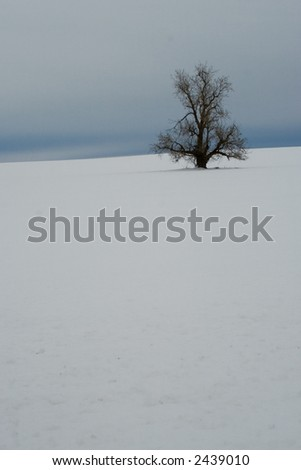 Lonely Winter Tree In The Snow - stock photo