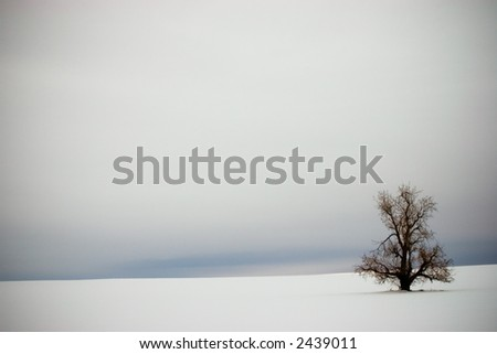 Lonely Winter Tree In The Snow Vignette - stock photo